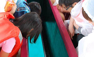 小樽青の洞窟ツアーで唯一のグラスボート!のイメージ