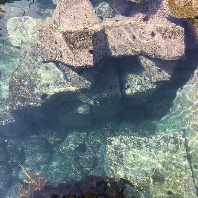 こんにちは!青の洞窟グラスボートです٩(^‿^)۶..今日は天気も良く、海の透明度も最高です️グラスボートからも海底がくっきり..乗り場の下を見るとすでにウニが沢山居ます!.トゲが長いのがキタムサキウニ🌞(通称白)トゲが短いのがエゾバフンウニ🌞(通称赤).バフンウニの方が味が濃く高級なのが有名ですね(^^).ウニを見て食べたくなったらぜひマリーナ食堂でお食事していって下さい️.引き続き六月末までのご予約でお電話で直接ご予約頂いたお客様にfacebook.インスタ見たよ!っと言って頂いたら500引きにさせて頂きます.是非この機会にご予約ください(*^◯^*)お待ちしております.#小樽観光#北海道#小樽#祝津#祝津マリーナ#クルージング#青の洞窟#小樽マリンレジャー#レジャー#青の洞窟グラスボート#グラスボート#観光船#観光#海鮮丼#マリーナ食堂#秘境#小樽の秘境#Japan#otaru#glassboat